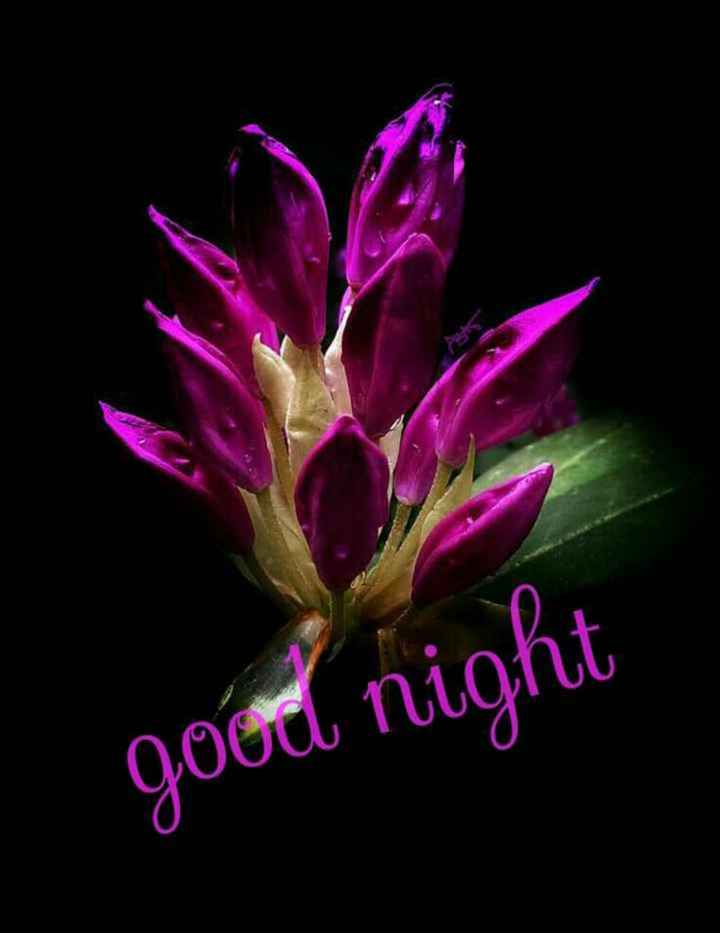 gud night - good night - ShareChat