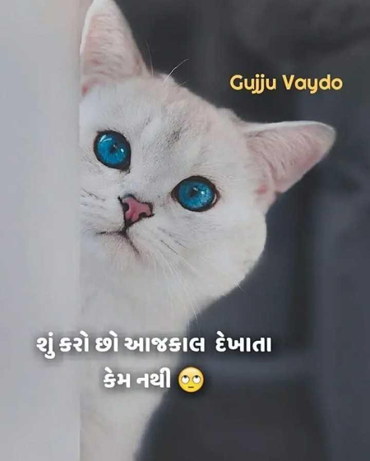 gujju special 😎 - Gujju Vaydo શું કરો છો આજકાલ દેખાતા કેમ નથી : - ShareChat