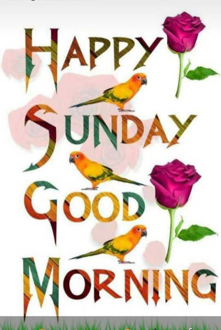 happy sunday... - Happy SUNDAY GOOD MORNING - ShareChat