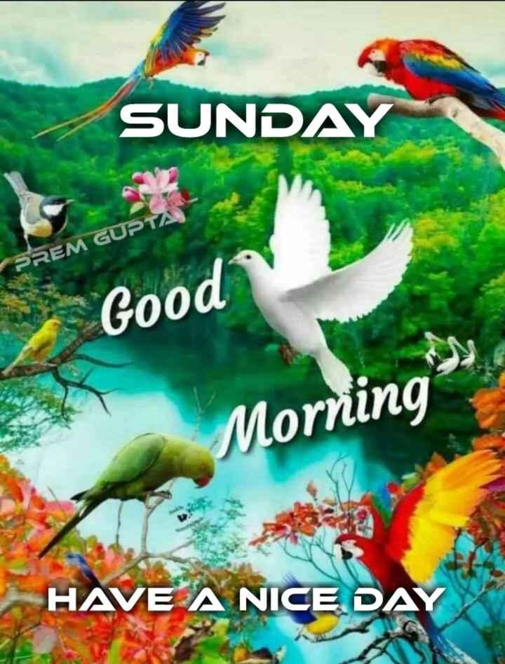 happy sunday 😊😊😊 - SUNDAY PREM GUPTA Good Morning HAVE A NICE DAY - ShareChat