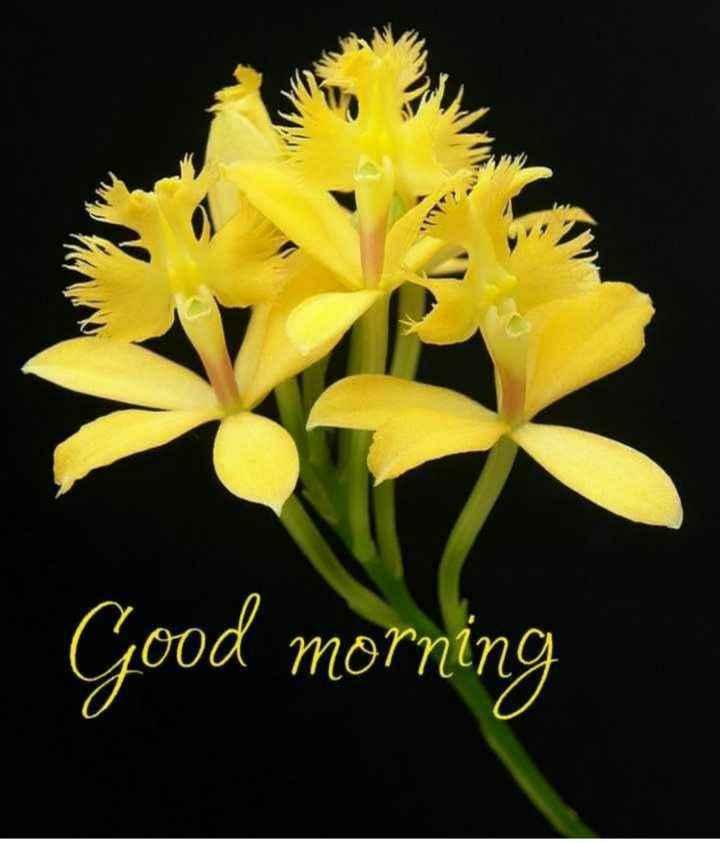hii frnds... ....👋👋👋 - Good morning - ShareChat