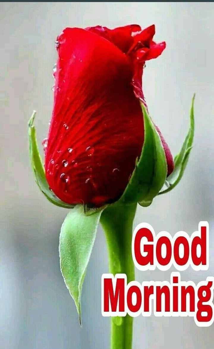 hii good morning friends - Good Morning - ShareChat