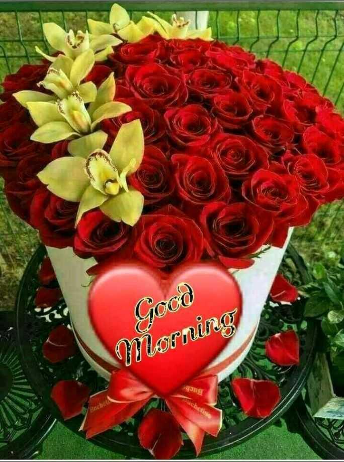 hii good morning friends - BIR LOUI . C905 - ShareChat