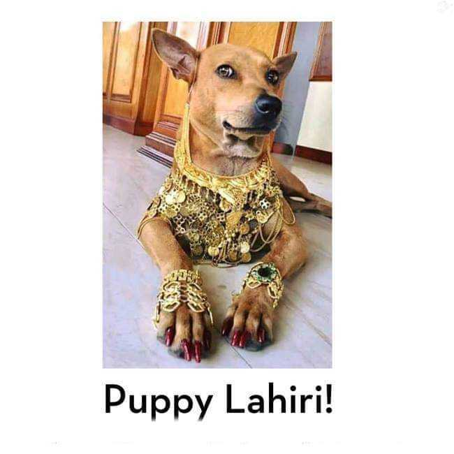 i love dogs - Puppy Lahiri ! - ShareChat