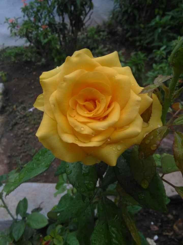 💖 i love roses 💖 - ShareChat