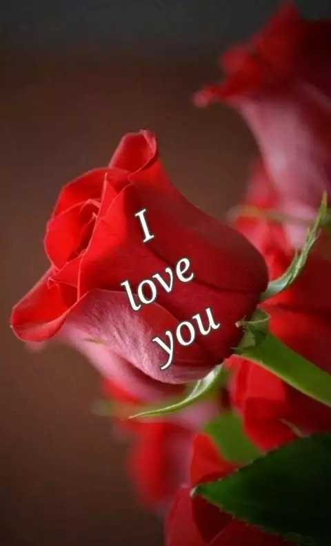 i love you 😘 - love you - ShareChat