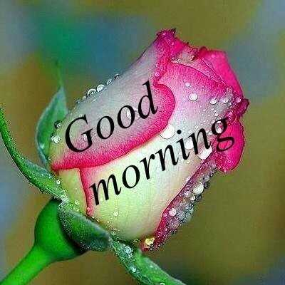 💝i love you babu💝 - Good : morning - ShareChat