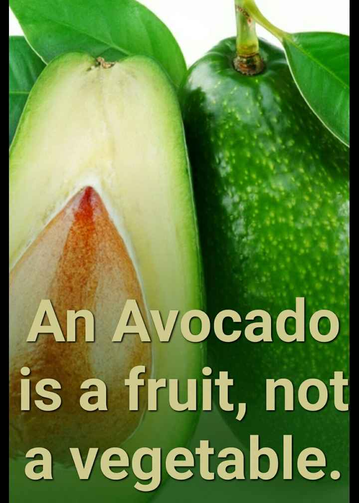information - An Avocado is a fruit , not a vegetable . - ShareChat