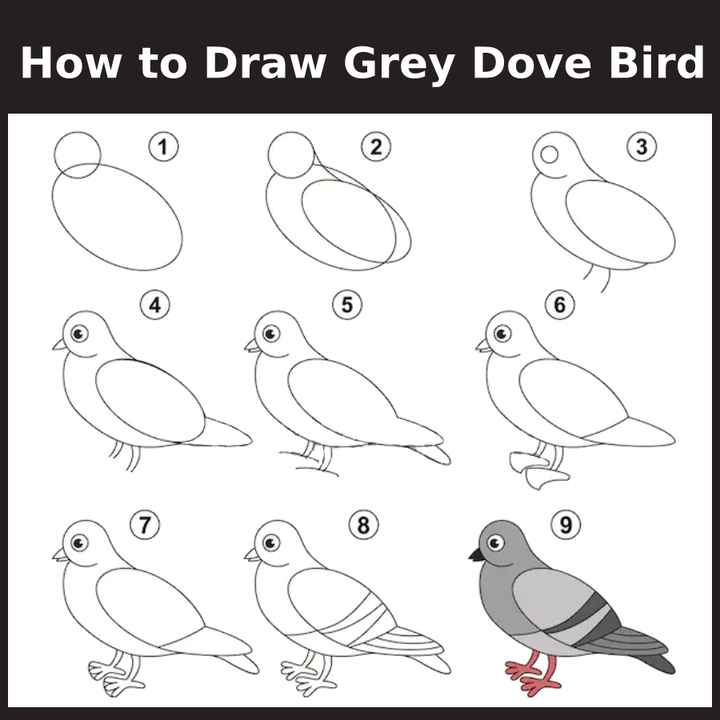 🎨kids diagrams - How to Draw Grey Dove Bird - ShareChat