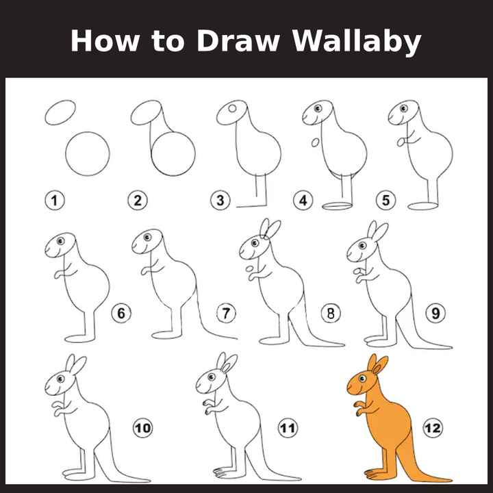 🎨kids diagrams - How to Draw Wallaby - ShareChat