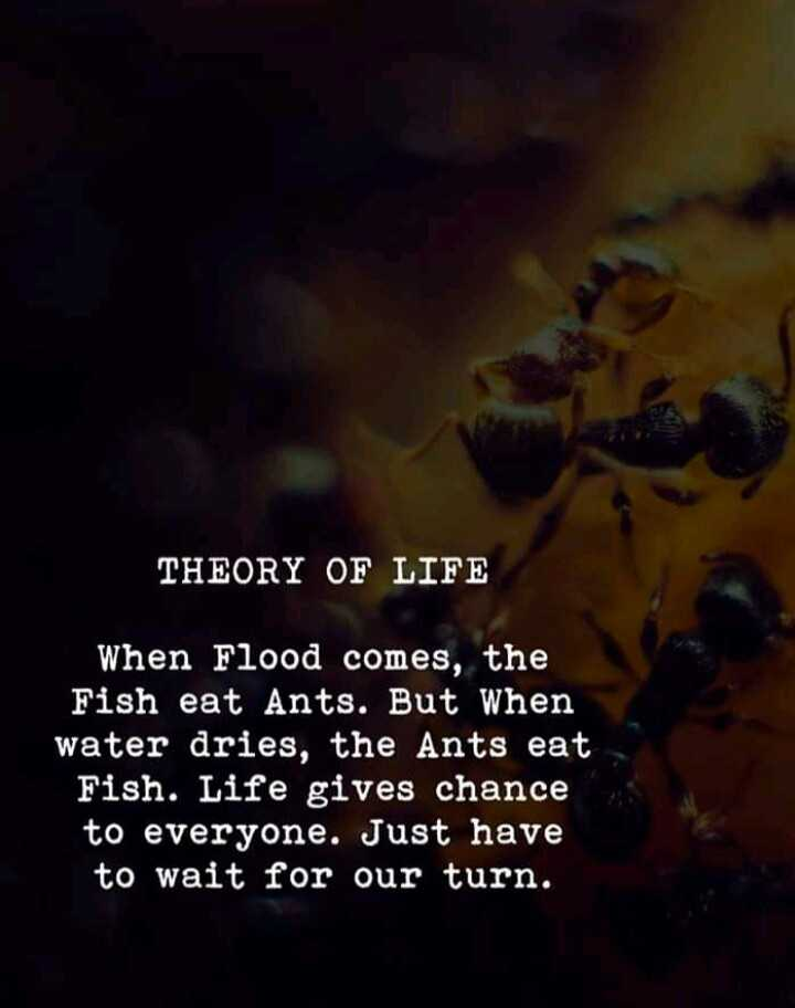 #life..😎 - THEORY OF LIFE When Flood comes , the Fish eat Ants . But when water dries , the Ants eat Fish . Life gives chance to everyone . Just have to wait for our turn . - ShareChat