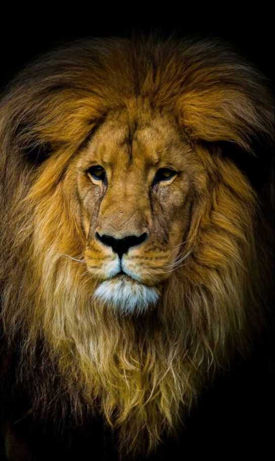 The Lion Power શભકમનઓ Whatsapp Status Images In