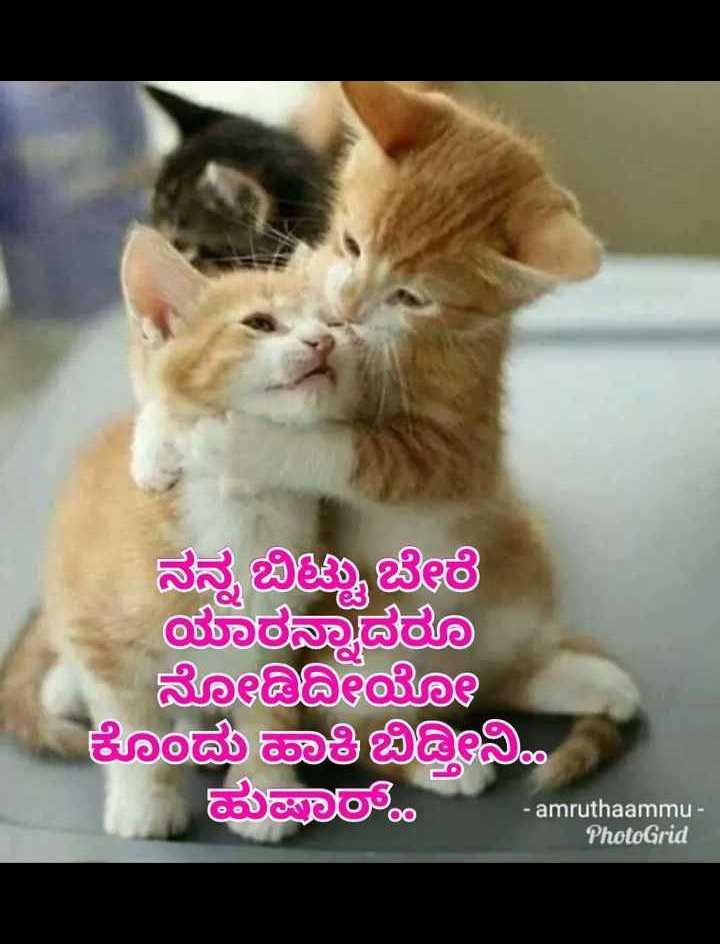 love ❤ - ನನ್ನ ಬಿಟ್ಟು ಬೇರೆ ಯಾರದಾದರೂ ನೋಡಿ ಕೊಂದು ಮಾಡಿಬಿಡಿಬಿ ಮಜಾ - amruthaammu - PhotoGrid - ShareChat