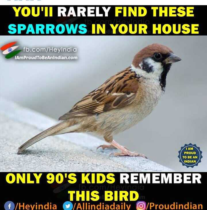 love bird😘😘 - YOU ' II RARELY FIND THESE SPARROWS IN YOUR HOUSE fb . com / HeyIndia IAmProudToBeAnindian . com IAM PROUD TO BE AN INDIAN om evindi ONLY 90 ' S KIDS REMEMBER THIS BIRD f / Heyindia / Allindiadaily / Proudindian - ShareChat