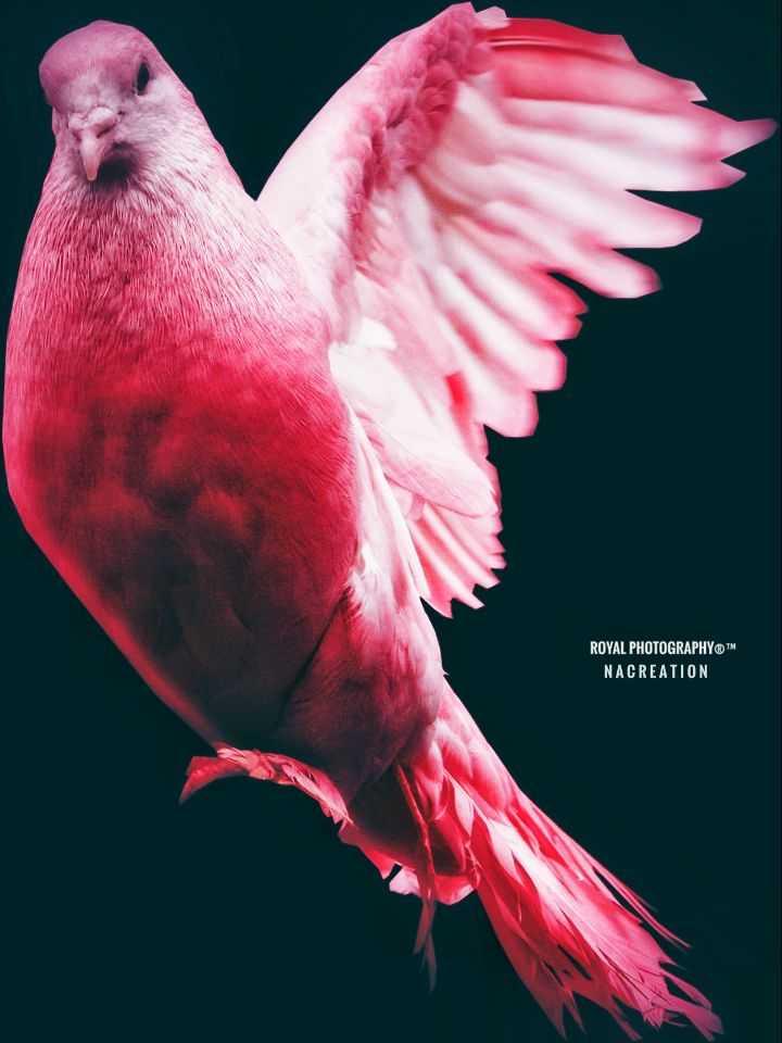 💖💖💖 love birds ....💖💖💖 - ROYAL PHOTOGRAPHYTM NACREATION - ShareChat