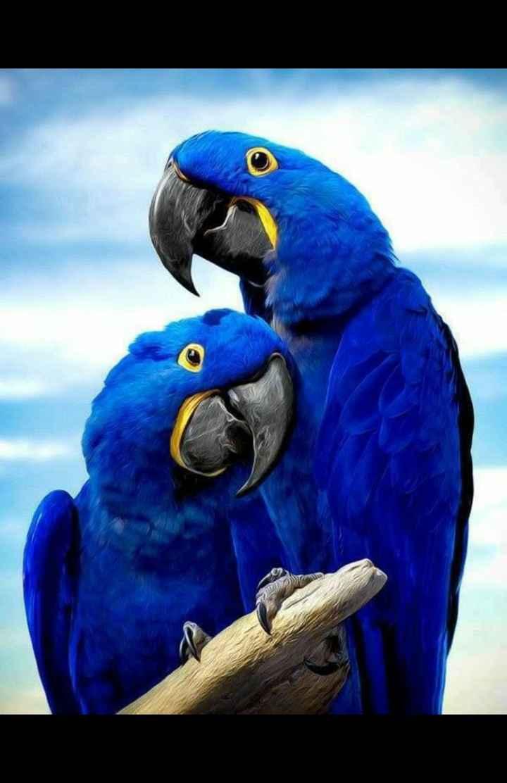💖💖💖 love birds ....💖💖💖 - ShareChat