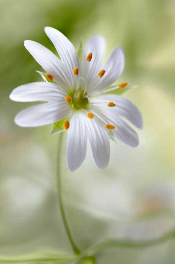 love flower  143@ - ShareChat