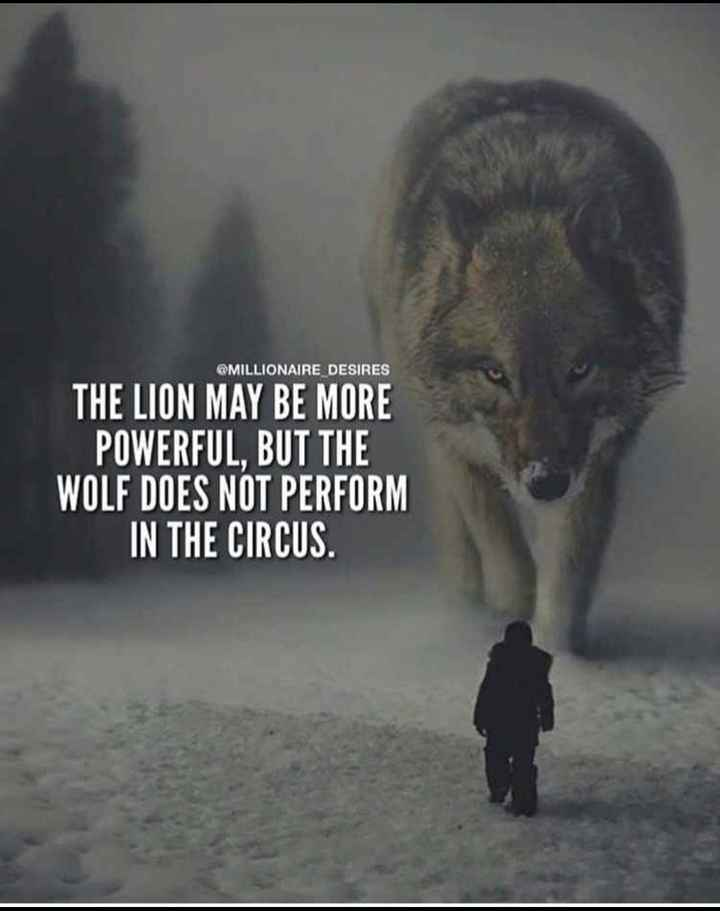 mass - @ MILLIONAIRE DESIRES THE LION MAY BE MORE POWERFUL , BUT THE WOLF DOES NOT PERFORM IN THE CIRCUS . - ShareChat