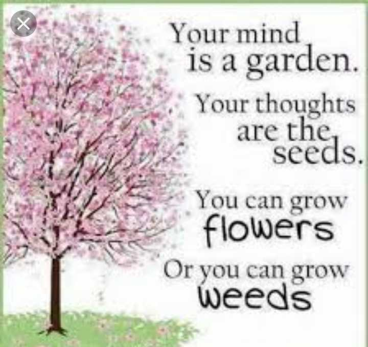 mass quotes - Your mind is a garden . Your thoughts are the , seeds . You can grow flowers Or you can grow weeds - ShareChat