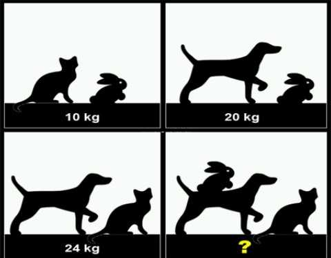 maths trick - 10 kg 20 kg 24 kg - ShareChat