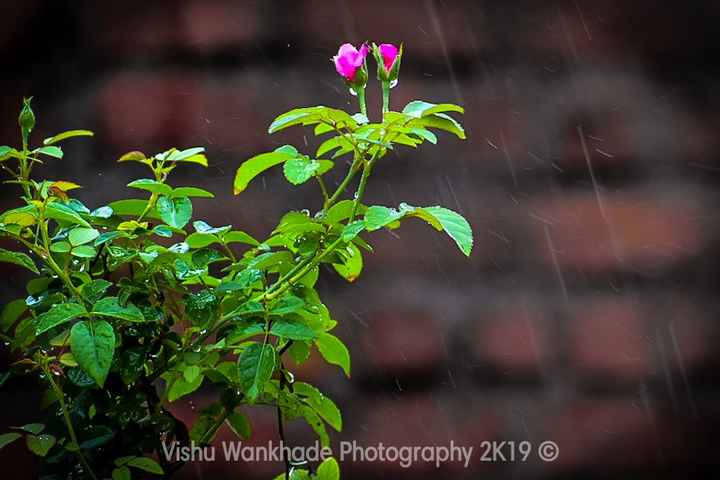 my photography - Vishu Wankhade Photography 2K19 © - ShareChat