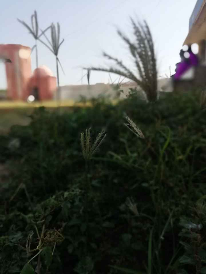 my photography - ShareChat