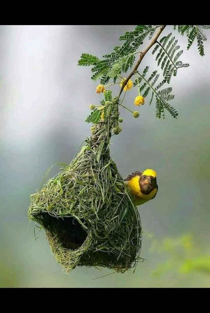 nature - படப் KA TAMA வகமாக TEL - ShareChat