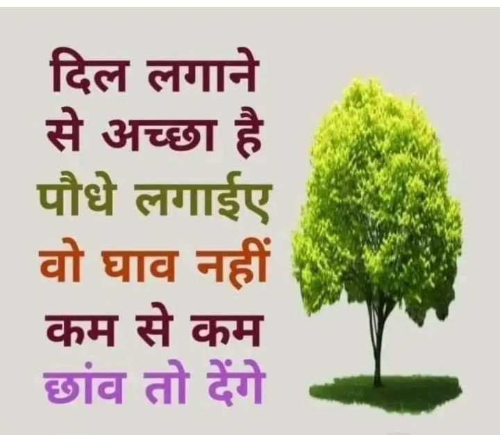 nature - दिल लगाने से अच्छा है पौधे लगाईए वो घाव नहीं कम से कम छांव तो देंगे - ShareChat