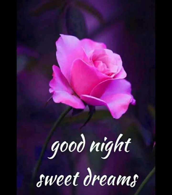 neti na staus - good night sweet dreams - ShareChat