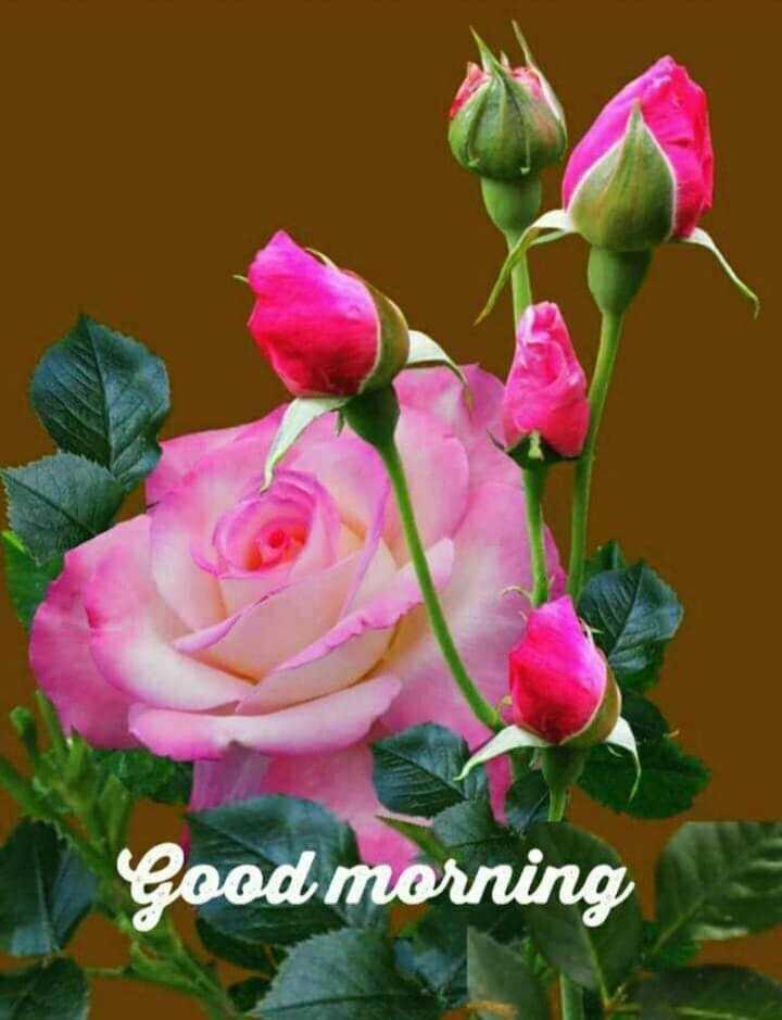 new life - Good morning - ShareChat