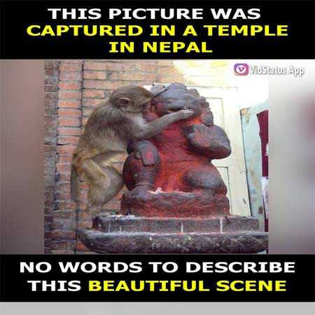 nice pice - THIS PICTURE WAS CAPTURED IN A TEMPLE IN NEPAL VoStatus App NO WORDS TO DESCRIBE THIS BEAUTIFUL SCENE - ShareChat