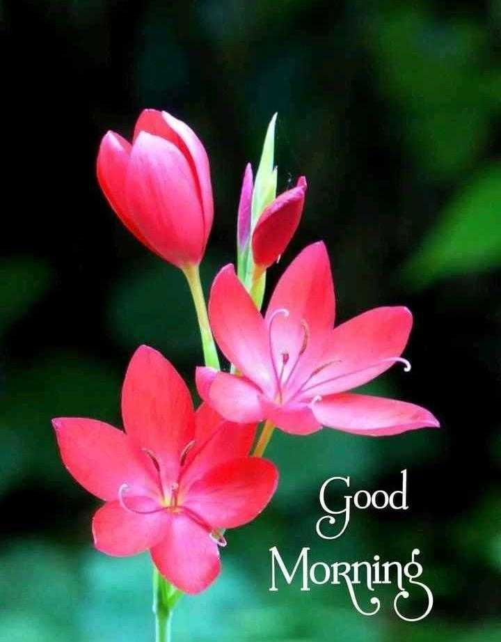 nvफनीफोटोज़ - Good Morning - ShareChat