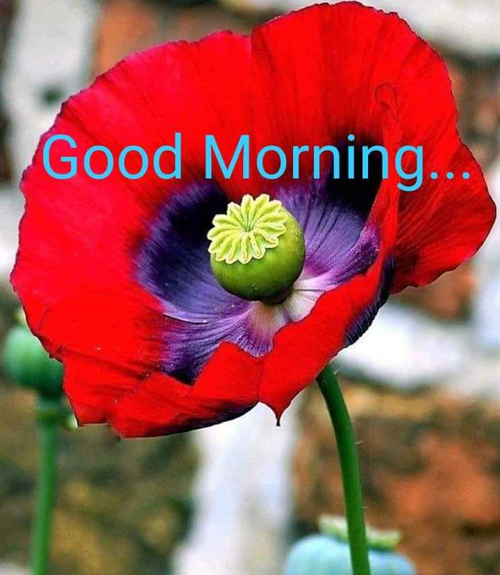 p.k.somshekhar - Good Morning . . . - ShareChat