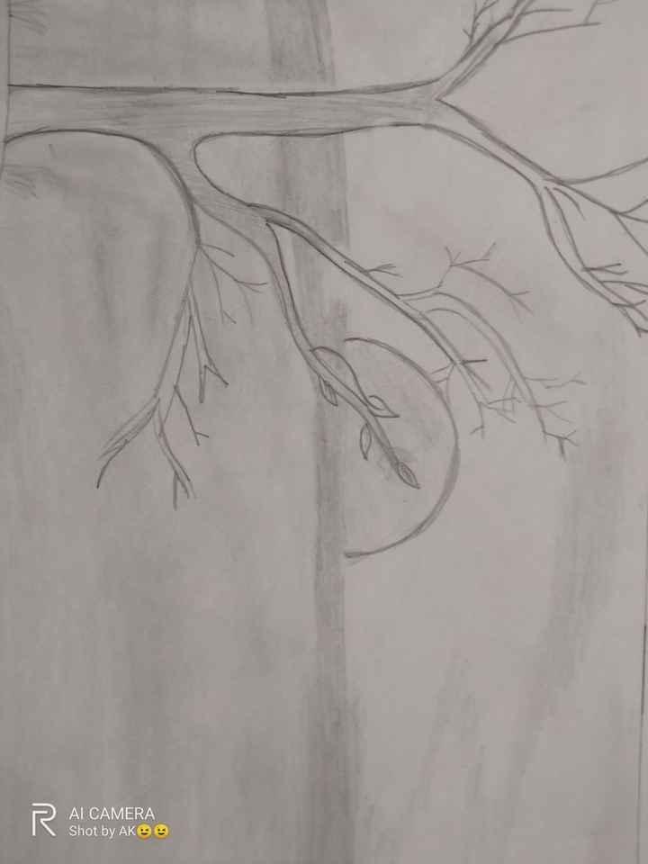 #pencil drawing - AL CAMERA Shot by AKOS - ShareChat