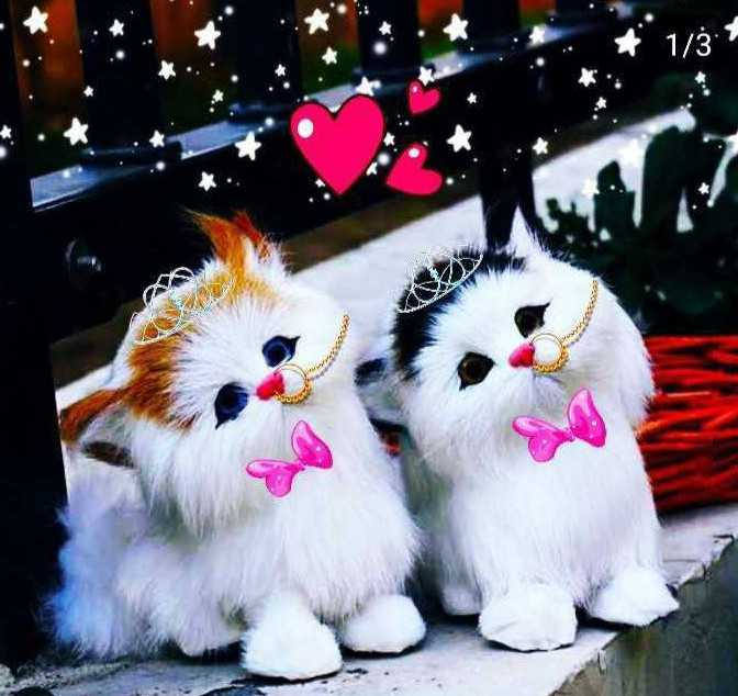 pet lover - 1 / ཏྟཾ ; - ShareChat