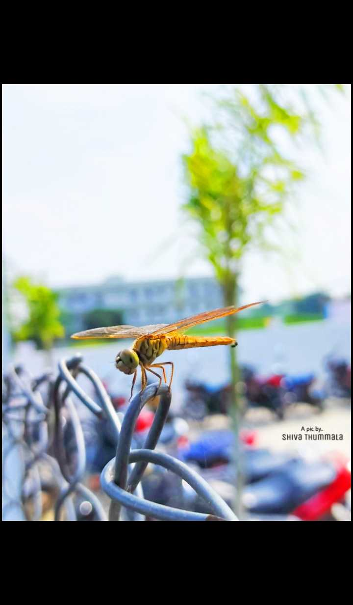 photography - A pic by SHIVA THummala - ShareChat