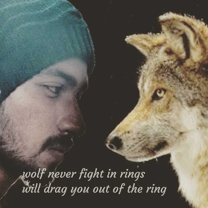 photo shoot - wolf never fight in rings will drag you out of the ring - ShareChat
