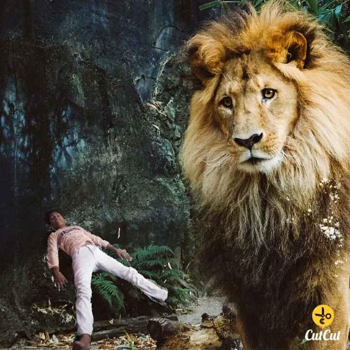Lion Status In Hindi