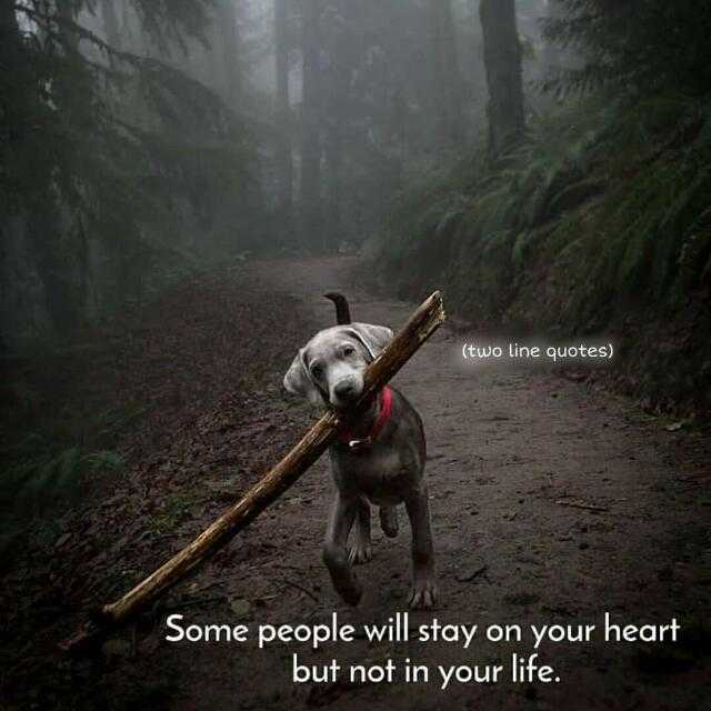 quotes - ( two line quotes ) Some people will stay on your heart but not in your life . - ShareChat