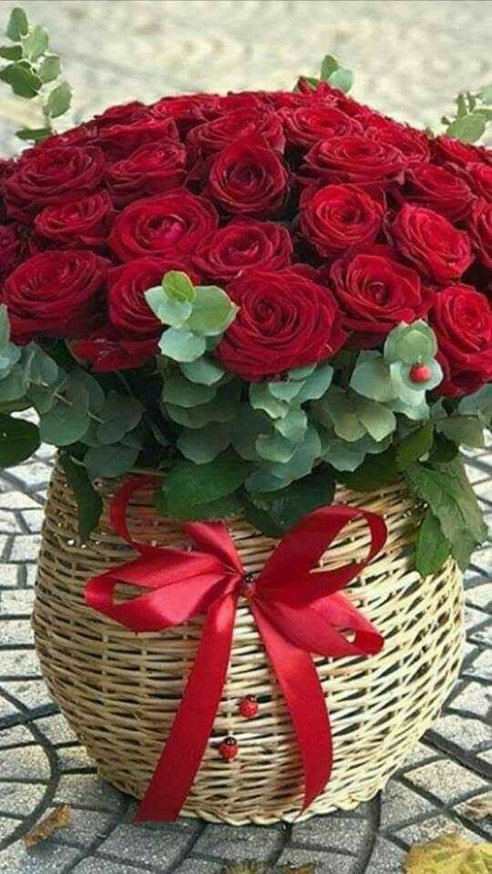 red rose 🌹 - ShareChat
