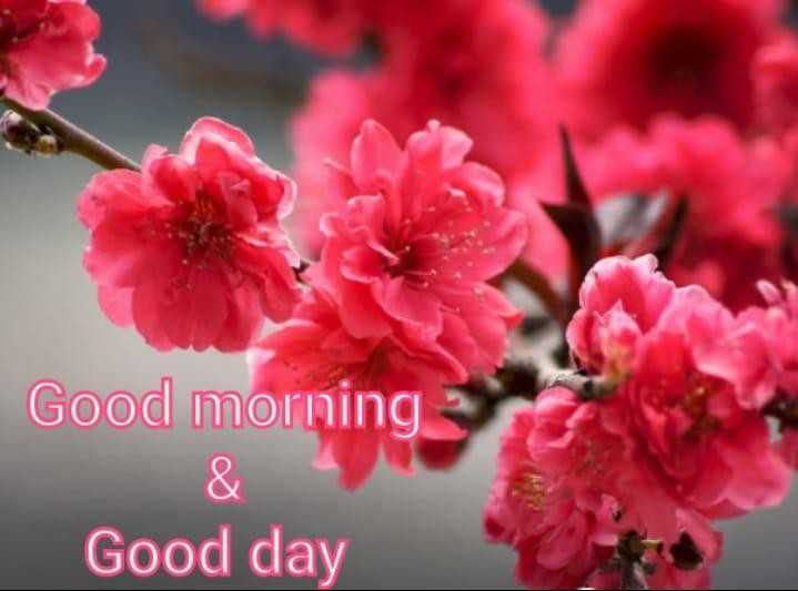 s.....a - Good morning Good day - ShareChat