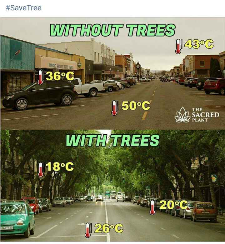 save tree 🌲🌳🌴🏝️ save environment 🌍🌍 - # SaveTree WITHOUT TREES N143°C MAGIC VALLEY AUTO PARTS J 36°C 150°C D THE SACRED PLANT CRED WITH TREES 118°C 20°CE JAY - 120 21 26°C - ShareChat