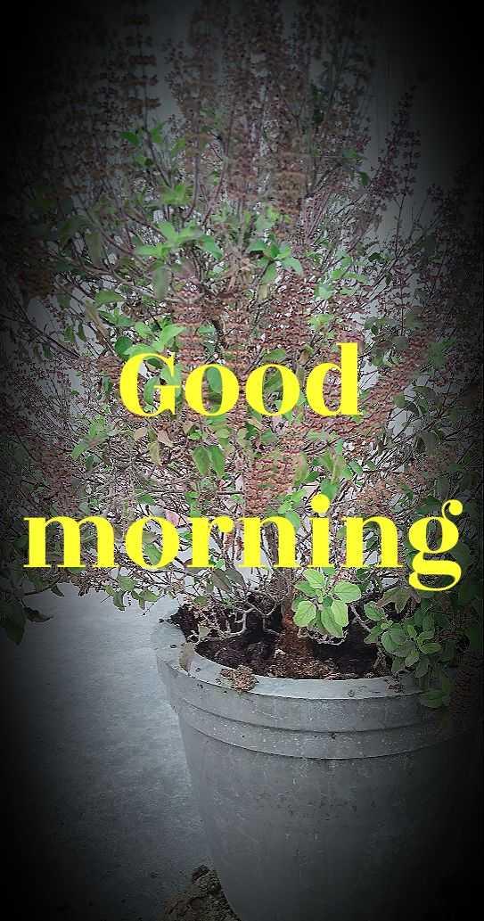 sharechat - Good morning - ShareChat