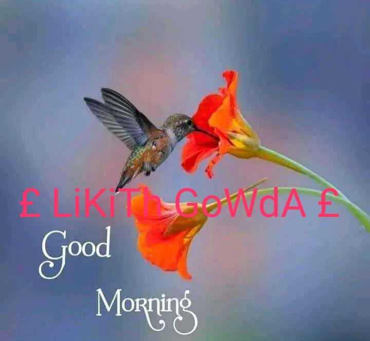 shubodaya - POWAN Good Morning - ShareChat