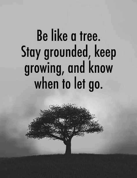 subhadeep - Be like a tree . Stay grounded , keep growing , and know when to let go . - ShareChat