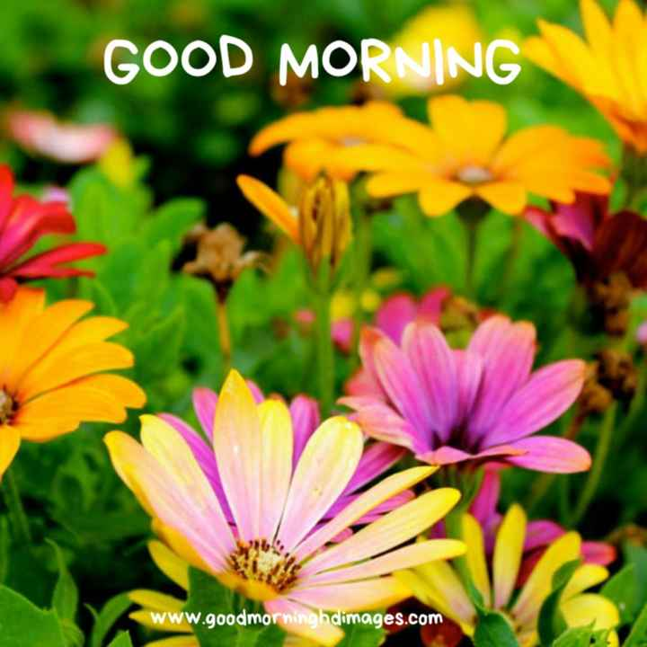 subhodayam - GOOD MORNING Www . goodmorninghdimages . com - ShareChat