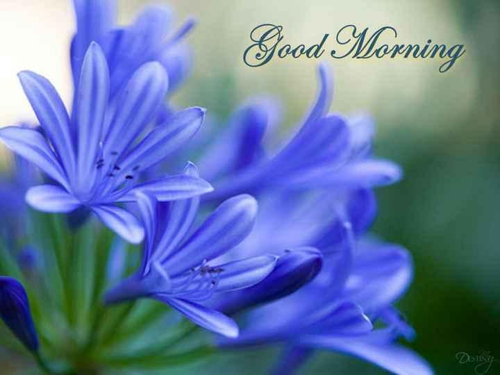 tarak - Good Morning Disting - ShareChat