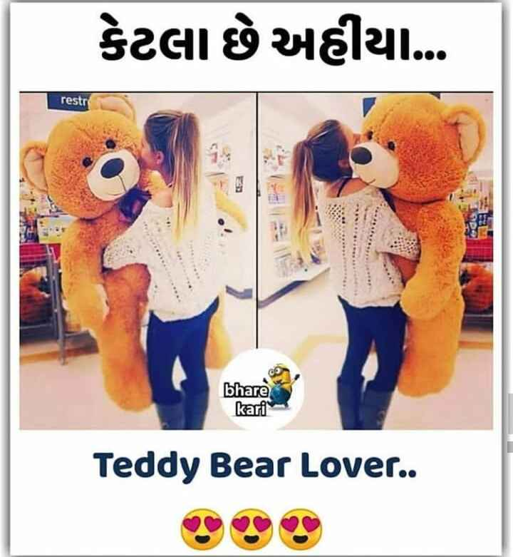 teady lover - કેટલા છે અહીયા … restre bhare kari Teddy Bear Lover . . - ShareChat
