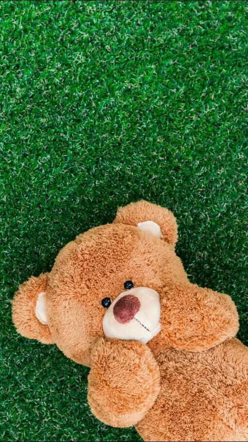 teddy - ShareChat