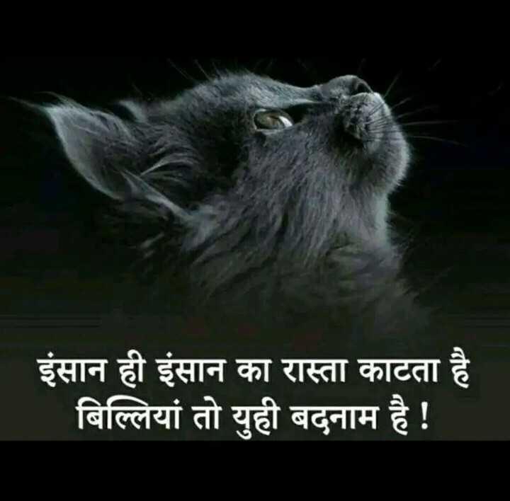 true line ✍🏻 - इंसान ही इंसान का रास्ता काटता है बिल्लियां तो युही बदनाम है ! - ShareChat